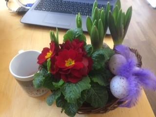 Blumen Weltfrauentag1